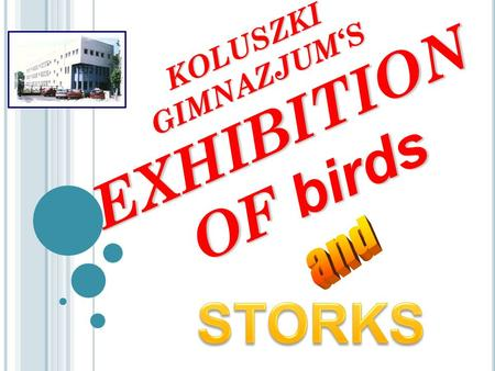 KOLUSZKI GIMNAZJUM'S EXHIBITION OF birds