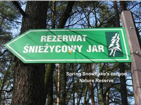 Spring Snowflakes canyon Nature Reserve. Take a trip to look for spring. Dzisiejsza wycieczka jest idealną propozycją dla wszystkich spragnionych wiosny.