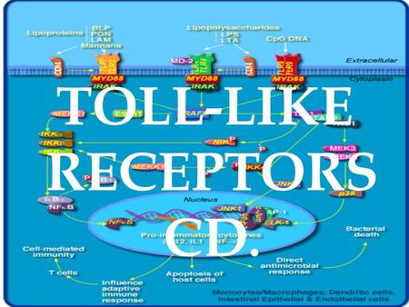 TOLL-LIKE RECEPTORS CD.