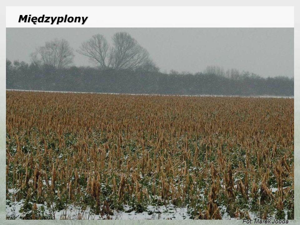 Międzyplony: Pakiet umożliwia ochronę gleb przed erozją i wód przed zanieczyszczeniami pochodzenia rolniczego, poprzez wysiewanie międzyplonów i wsiewek poplonowych i pozostawianie ich na okres zimy.Pakiet umożliwia ochronę gleb przed erozją i wód przed zanieczyszczeniami pochodzenia rolniczego, poprzez wysiewanie międzyplonów i wsiewek poplonowych i pozostawianie ich na okres zimy.