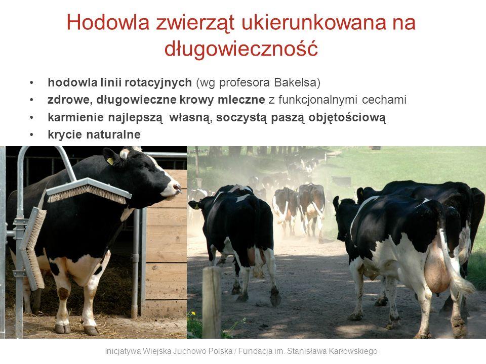 Warzywa z charakterem ogrodnictwo: 30 rodzajów upraw, 2 tunele foliowe sprzedaż bezpośrednia, zaopatrywanie dużych hurtowni Inicjatywa Wiejska Juchowo Polska / Fundacja im.