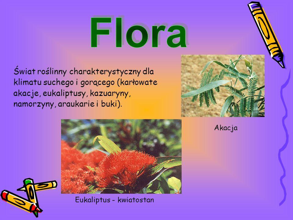 Świat roślinny charakterystyczny dla klimatu suchego i gorącego (karłowate akacje, eukaliptusy, kazuaryny, namorzyny, araukarie i buki).