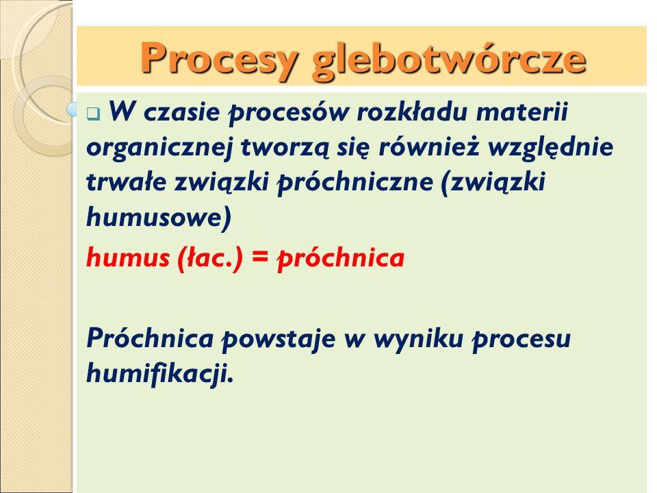 Budowa profilu glebowego Poziomy genetyczne Poziom próchniczny (A) Poziom zubożenia (wymywania) (E) Poziom wzbogacania (B) Poziom brunatnienia (Bbr) Poziom skały macierzystej (C) Podłoże skalne (R) Podłoże mineralne (D) w profilach gleb torfowych