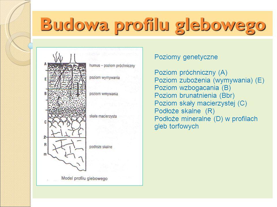 Budowa profilu glebowego Poziomy glejowe (G) – mają zielonkawą barwę, zawierają zredukowane związki żelaza dwuwartościowego – poziomy te występują w glebach zawodnionych o wysokim poziomie wód gruntowych Poziomy murszowe (M) powstają w glebach podmokłych lub torfowych, składają się ze zmurszałej substancji organicznej.