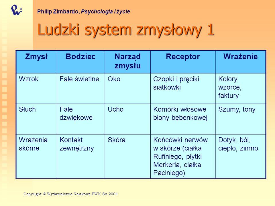 Ludzki system zmysłowy 2 Philip Zimbardo, Psychologia i życie ZmysłBodziecNarząd zmysłu ReceptorWrażenie WęchSubstancje lotne NosKomórki włosowe nabłonka węchowego Zapachy SmakSubstancje rozpuszczalne JęzykKubki smakowe języka Smaki (słodki, kwaśny, gorzki, słony) RównowagaSiły mechaniczne i grawitacyjne Ucho wewnę- trzne Komórki włosowe kanałów półkolistych i przedsionka Ruch w przestrzeni i siła ciążenia Adapted by permission from p.