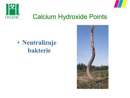 Calcium Hydroxide Points Neutralizuje bakterie. O ćwiekach Calcium Hydroxide Points n Oszczędność czasu - niezawodna alternatywa do pasty z wodorotlenkiem.