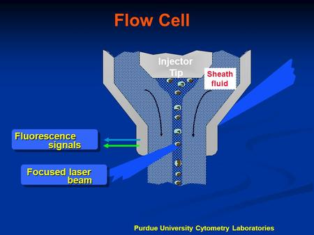 Flow Cell Injector Tip Fluorescence signals Focused laser beam Sheath fluid Purdue University Cytometry Laboratories.