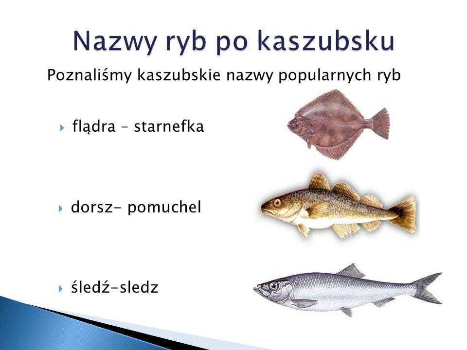 łosoś – laks Poznaliśmy kaszubskie nazwy popularnych ryb  węgorzyca – kwap  diabeł morski - knurom