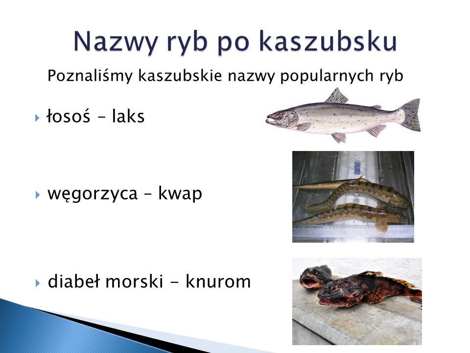 Pan Stanisław złowił łososia, który ważył 20 kg i miał 1,5 m łosoś jego ulubionymi rybami są węgorze i łososie węgorz rybak łowi około 100 kg ryb dziennie, dorsz najczęściej poławianą rybą jest dorsz