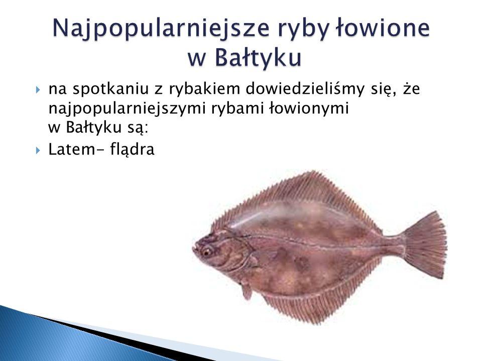 wiosną i jesienią  śledzie Najpopularniejsze ryby łowione w Bałtyku  dorsze