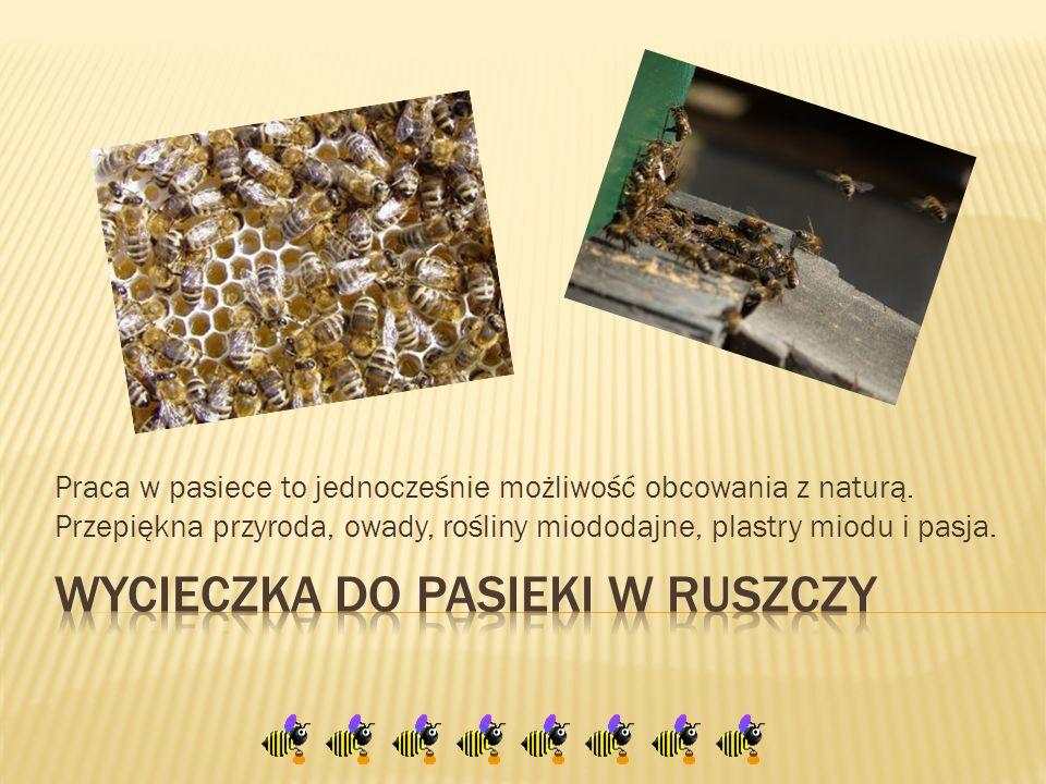  W dniu 7.X.2014r.grupa świetliczaków odwiedziła pasiekę pana Władysława Chyli w Ruszczy.