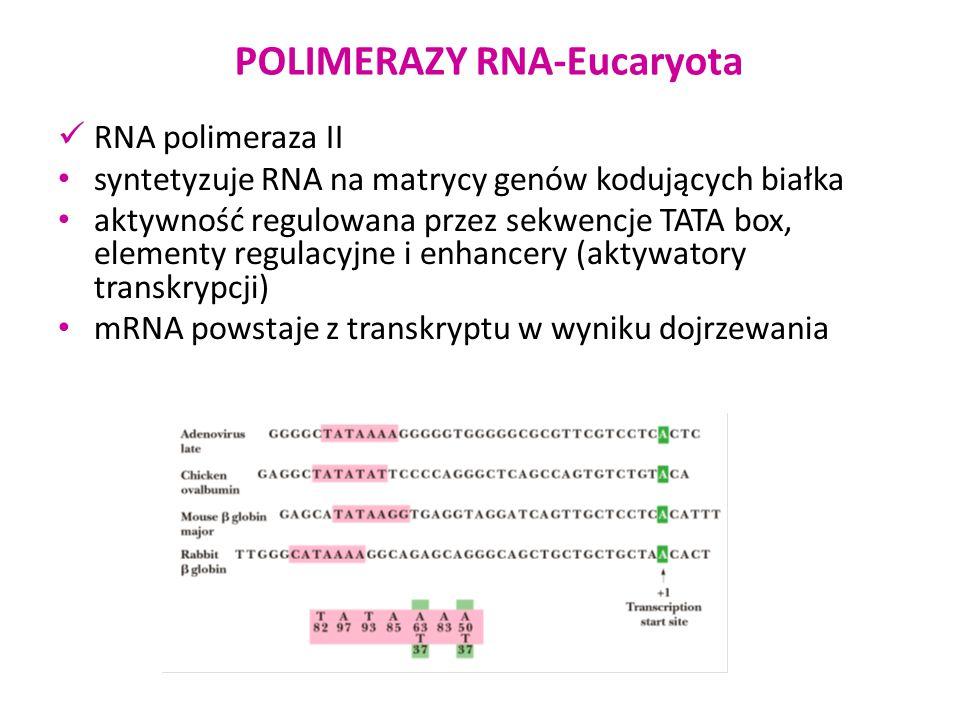 Wyspa CpG POLIMERAZY RNA-Eucaryota