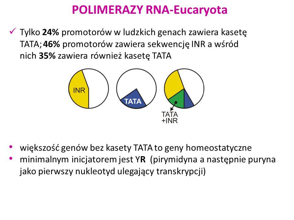 RNA polimeraza III (jest obecna tylko u zwierząt) 5S rRNA produkowana jest niezależnie poza jąderkiem promotory dla tej polimerazy znajdują się w obrębie sekwencji kodującej (a więc w obrębie samego transkryptu) Odpowiedzialna również za syntezę interferencyjnego RNA (RNAi)