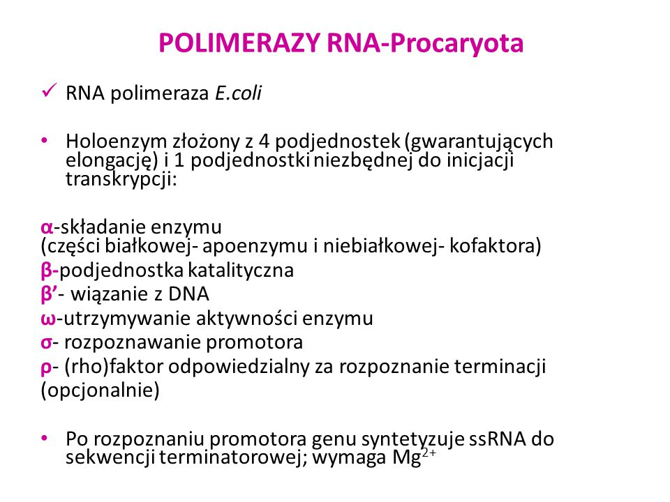 """POLIMERAZY RNA-Procaryota RNA polimeraza Faga SP6 produkowana przez Salmonella typhimurium LT2 zakażoną fagiem SP6 pojedynczy polipeptyd 96kDa polimeraza rozpoznaje tylko promotor SP6 """"produkuje ośmiokrotną ilość RNA w stosunku do DNA nie przerywa transkrypcji przy nacięciach matrycy wymaga Mg 2+ 10nm"""