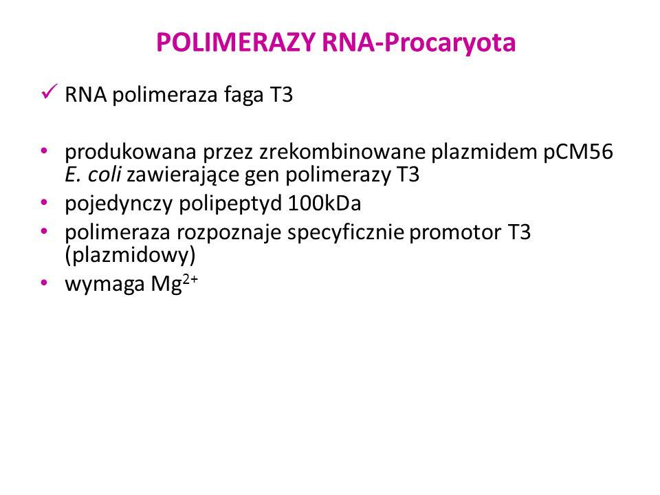 POLIMERAZY RNA-Procaryota RNA polimeraza faga T7 produkowana przez zrekombinowane plazmidem pAR1219 E.