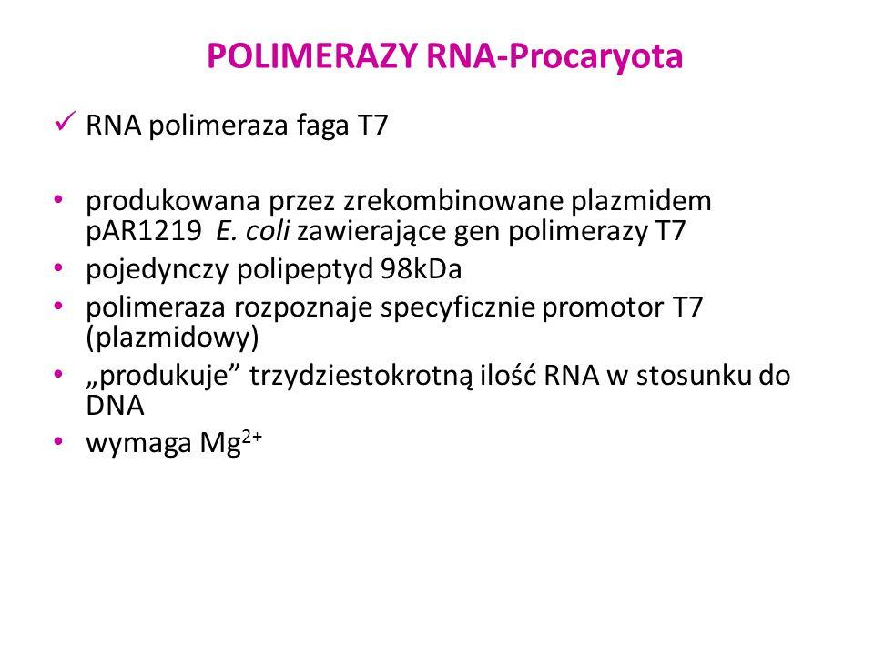 POLIMERAZY RNA-Procaryota RNA polimeraza faga T7