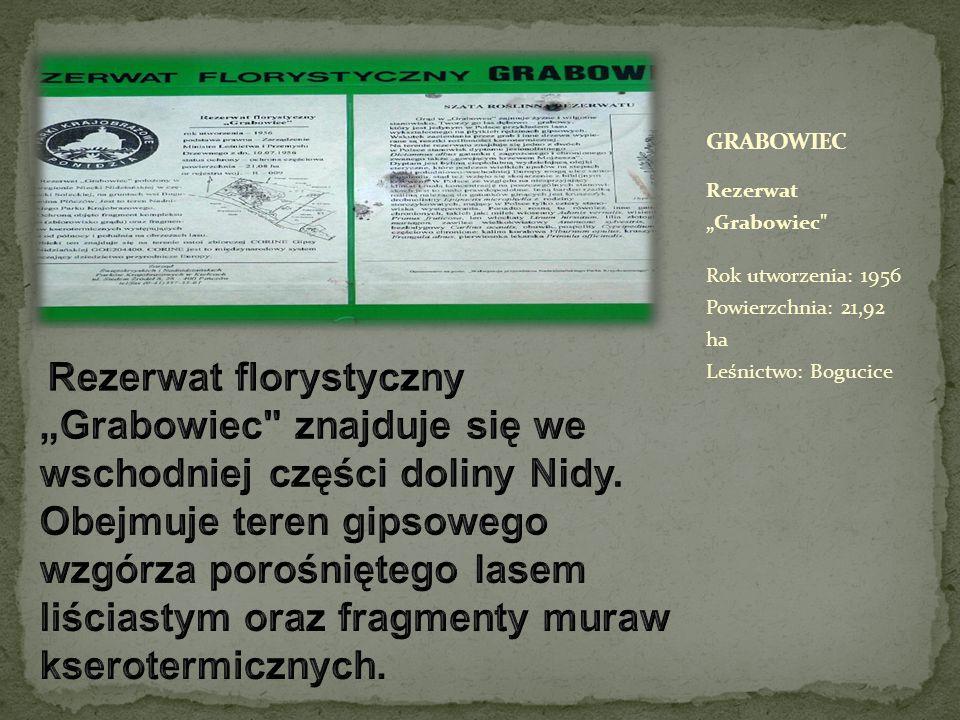 Rezerwat chroni zbiorowisko lasu grądowego w odmianie kserotermicznej, jest to jedyny w Polsce przykład drzewostanu dębowo-grabowego rosnącego na płytkich rędzinach z uwidocznionymi zjawiskami krasu powierzchniowego