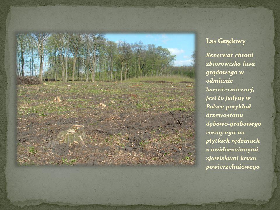 utworzono w celu zachowania ze względów naukowych i dydaktycznych naturalnych płatów roślinności kserotermicznej z wieloma gatunkami roślin chronionych, w tym stanowiska dyptamu jesionolistnego tzw.
