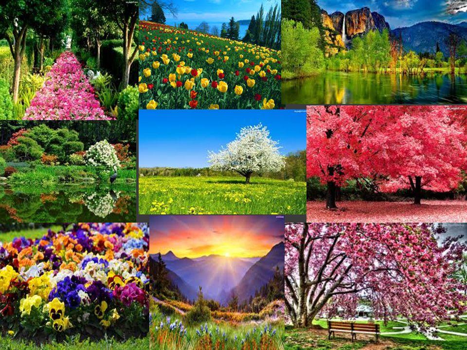Data początku wiosny  Pierwszy dzień wiosny, obchodzony jest w dniu równonocy wiosennej, który najczęściej przypada w dniu 21 marca lub dnia poprzedniego lub następnego, w zależności gdzie jest obserwowana.