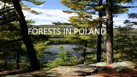 FORESTS IN POLAND. THE AREA OF FORESTS IN POLAND Forests in Poland grow on 9 million hectares, which cover more than 28% of the country. The majority.