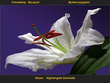 Music: Nightengale Serenade Friendship BouquetBukiet przyjaźni.