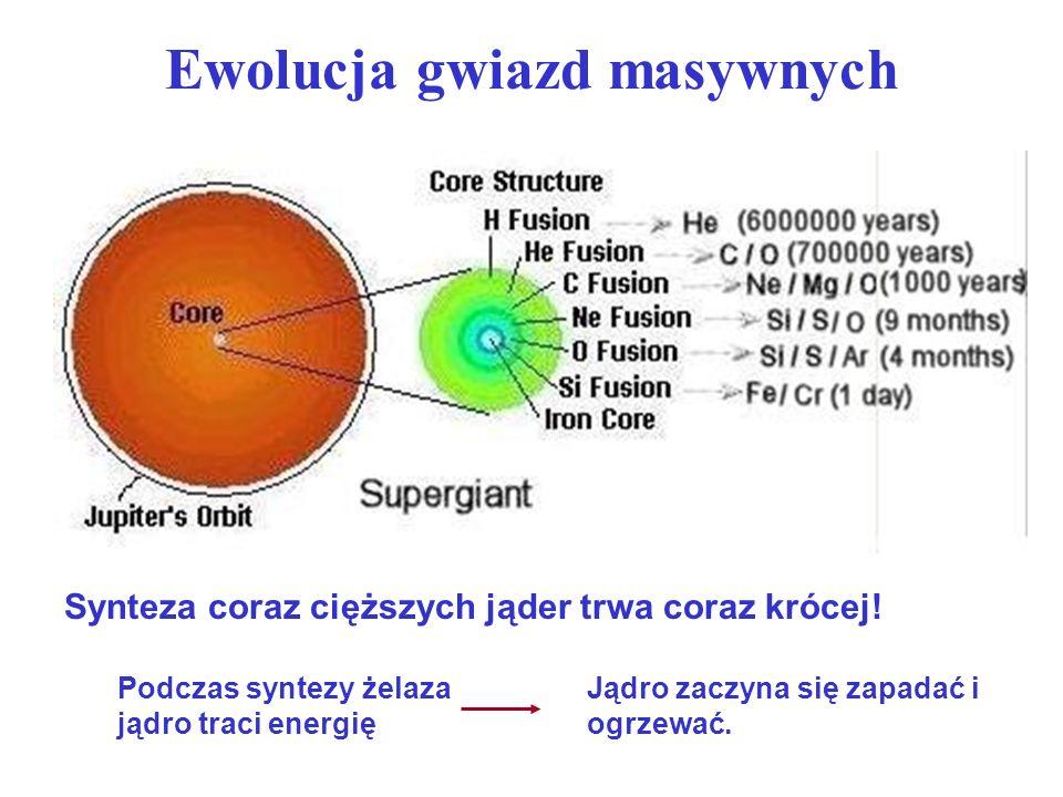 Ewolucja gwiazd masywnych W temperaturze 5 – 10 mld K zaczyna się proces fotodezintegracji jąder: Podczas zapadania jądro przechodzi przez fazę białego karła (zdegenerowany gaz elektronowy), jednak masa jest większa niż 1,44 M i ciśnienie zdegenerowanego gazu nie może powstrzymać grawitacji.