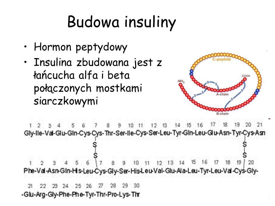 Działanie insuliny Insulina łączy się z receptorem insuliny powodując –Wychwyt glukozy –Spalanie glukozy –Syntezę glikogenu –Wychwyt aminkwasów –Syntezę białek –Spadek spalania tłuszczów –Syntezę kwasów tłuszczowych –Transport jonów –Syntezę DNA –Wydłużenie życia komórek