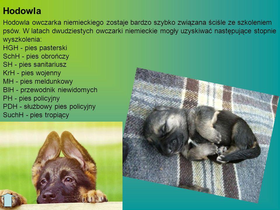 http://www.owczarek.wortale.net/art.php?dz=34 http://www.owczarek.wortale.net/art.php?dz=1 http://madzia1015.blog.interia.pl/?id=1709078 http://kartka.info/szczeniak-owczarka-niemieckiego/