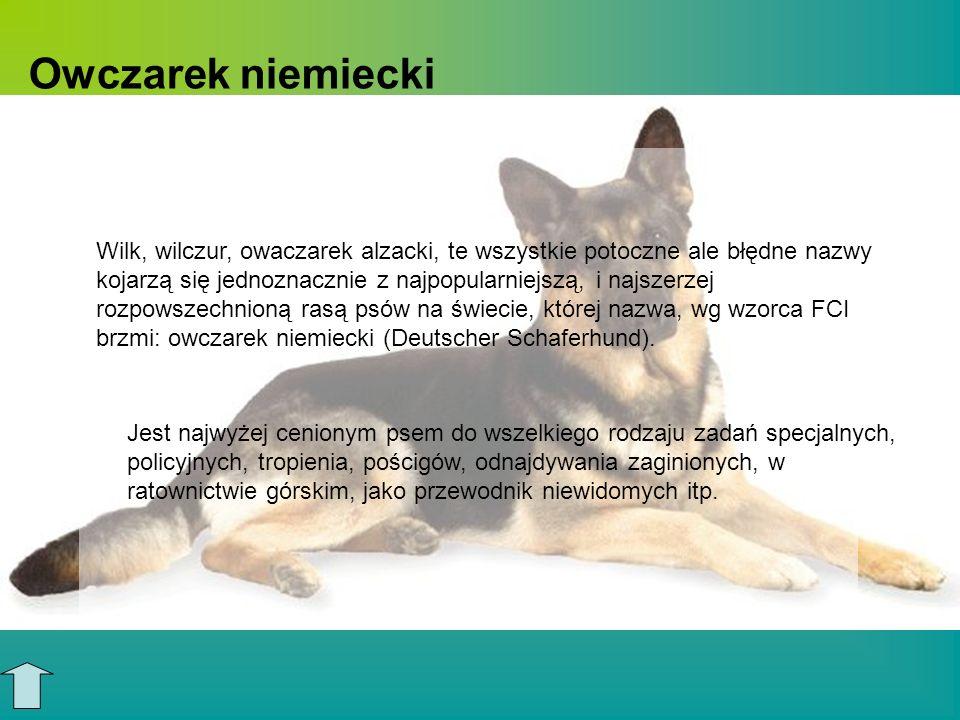 Historia rasy Jest to naturalna rasa psów, czyli wyhodowana na bazie szczepów o podobnych cechach, jedynie odpowiednio modyfikowanych przez hodowców.