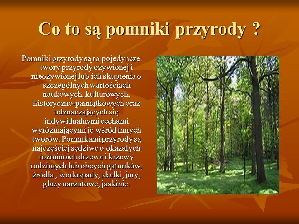 Pomniki przyrody W Otorowie znajduje się wiele pięknych i dużych drzew, ale nie wszystkie są pomnikami przyrody.