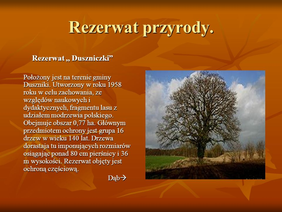 Parki krajobrazowe.Sierakowski Park Krajobrazowy Został utworzony w 1991 roku.