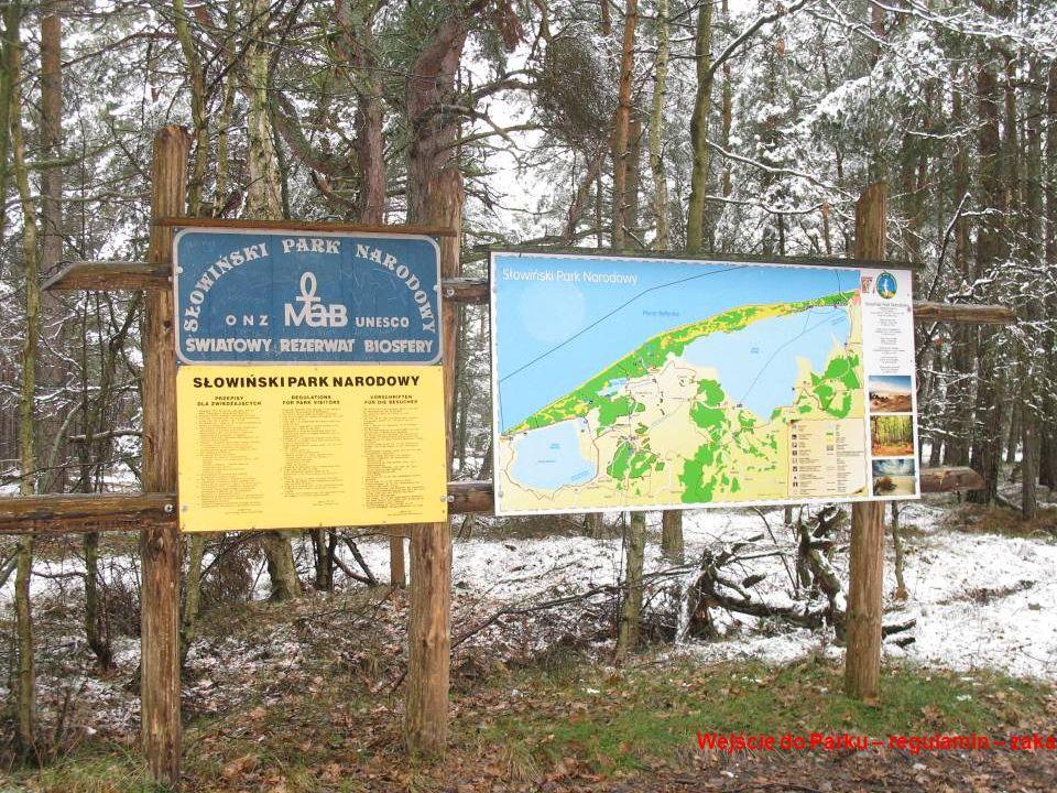 Mit naturalności Połonina Smerek w Bieszczadzkim Parku Narodowym