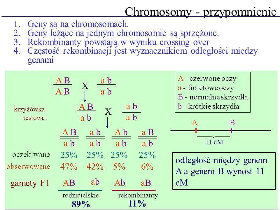 Test 2 Analiza statystyczna wyników krzyżówek hipoteza zerowa: wynik nie odbiega od założonego rozkładu wyliczenie współczynnika 2 (chi-kwadrat) odczytanie prawdopodobieństwa z tabel d.f \ P0,050,001 13,810,3 26,013,8 37,816,2 tabela prawdopodobieństwa w.obs.rozkładw.ocz.