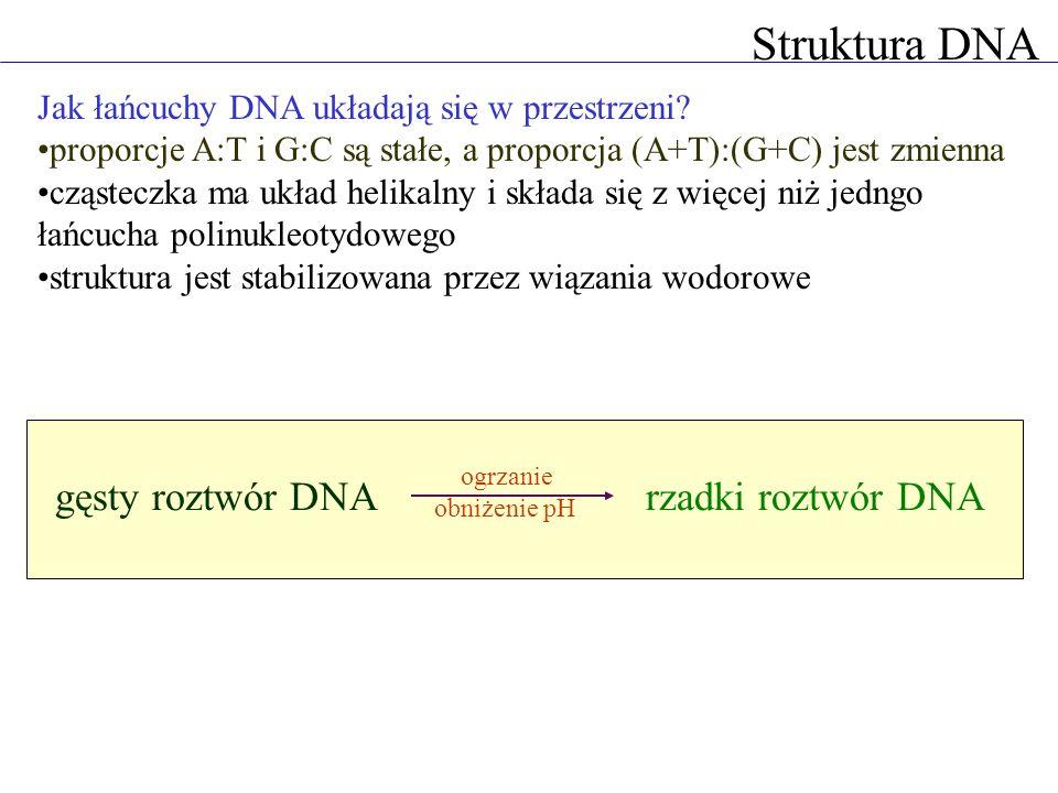 Struktura DNA Watson i Crick: podwójna helisa cząsteczka DNA składa się z dwóch nici polinukleotydowych nici łączą wiązania wodorowe między zasadami azotowymi adenina zawsze oddziałuje z tyminą, a guanina z cytozyną