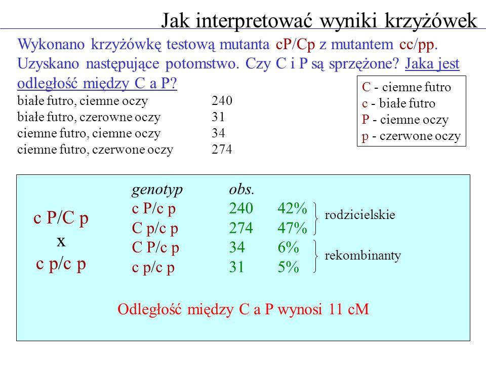 Jak przewidywać wyniki krzyżówek Czerwona barwa kwiatów Antirrhinum jest determinowana przez dwa geny A i B spełniające tę samą funkcję, leżące na jednym chromosomie i oddalone od siebie o 5 cM.