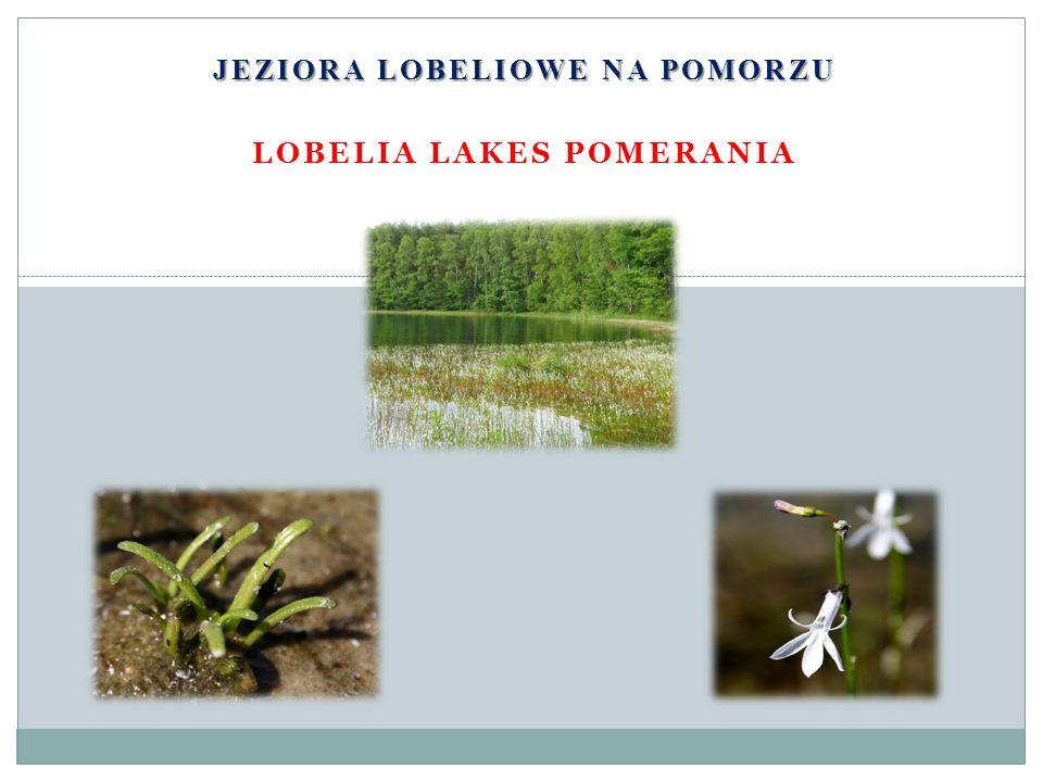 Występowanie w Polsce W Polsce jest, według różnych źródeł, 150-170 jezior lobeliowych.