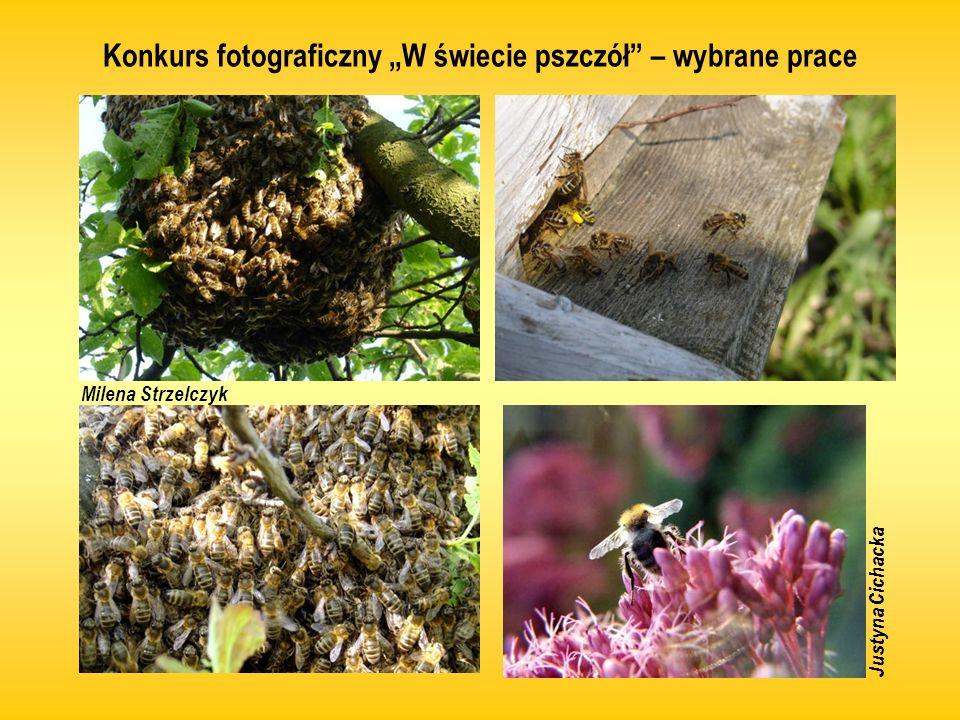 Konkurs plastyczny Pszczoły w środowisku – wybrane prace Daniel Ślusarczyk Weronika Majchrzak, Ola Odwald Karolina Stolarczyk Mateusz Walkiewicz