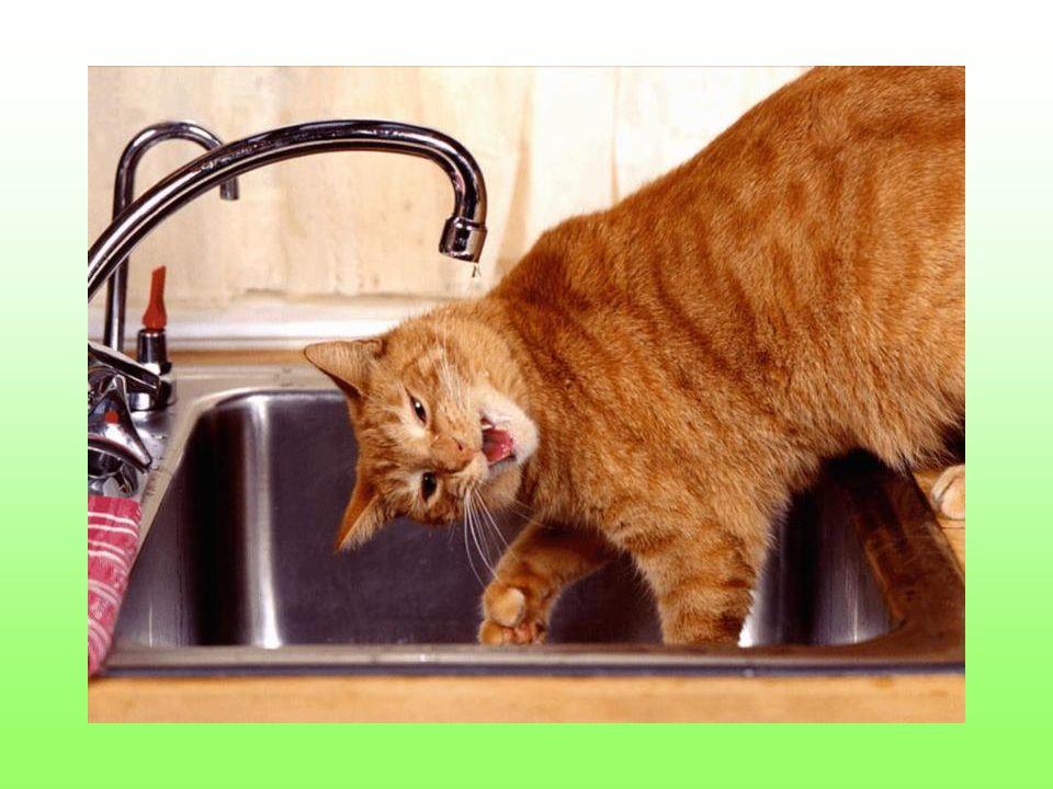 I zawsze myją po sobie naczynia.