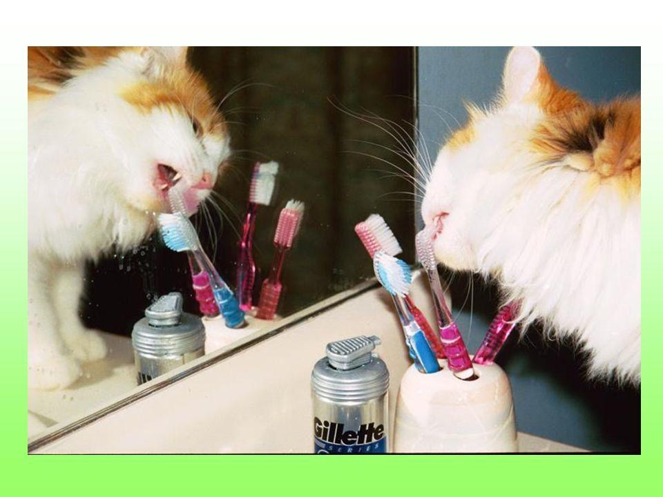 Dochodzi do tego, że nawet myją zęby Twoja szczoteczką. A jakby tego było mało…