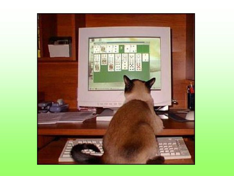 A kto powiedział że kot nie może pobawić się myszką po godzinach pracy?