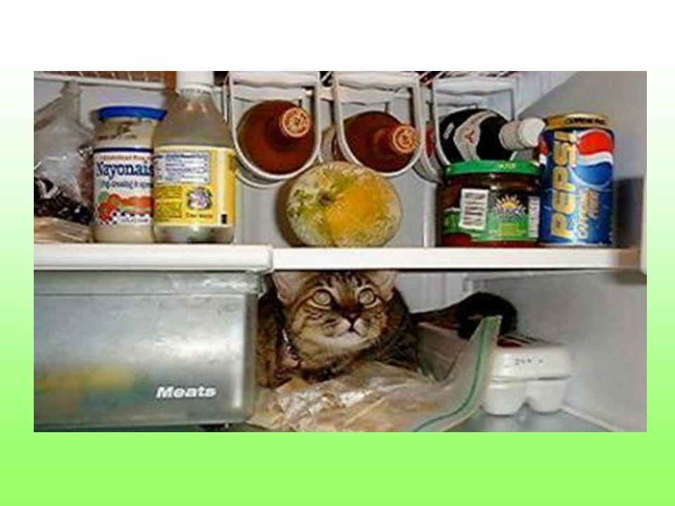 Choćby i w lodówce, którą Ty zapełniłeś. Ale bywa i tak, że są wegetarianami więc…