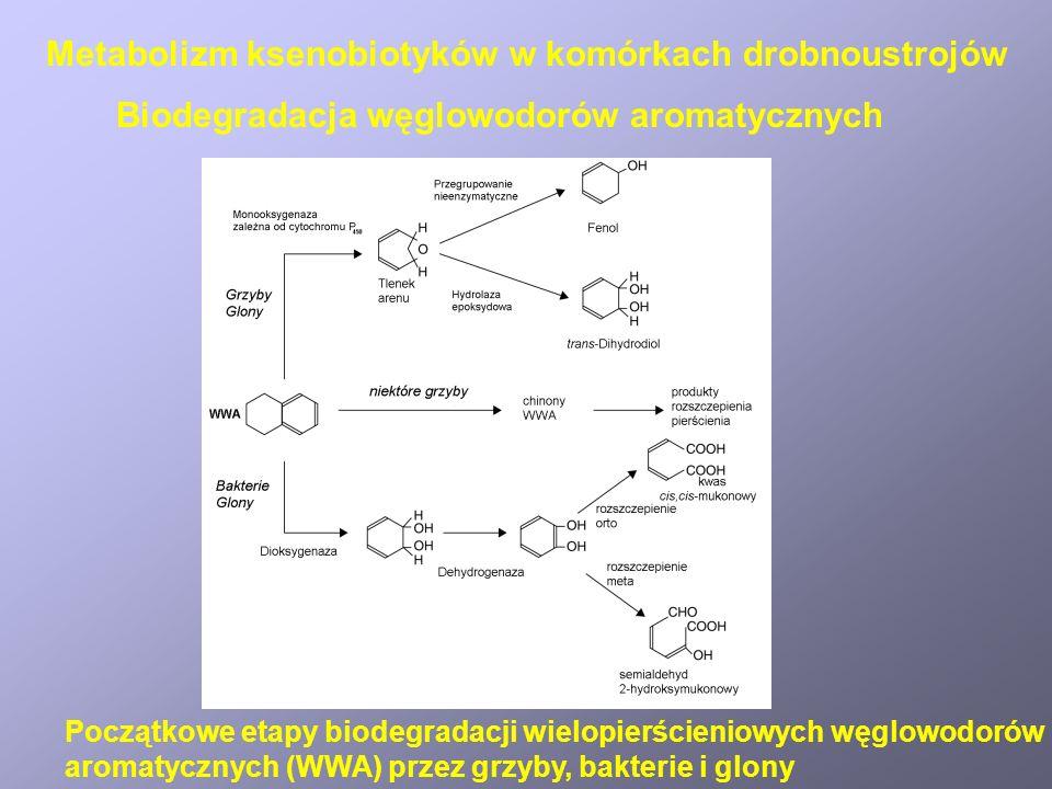 Biotransformacje halogenopochodnych Mechanizmy dehalogenacji