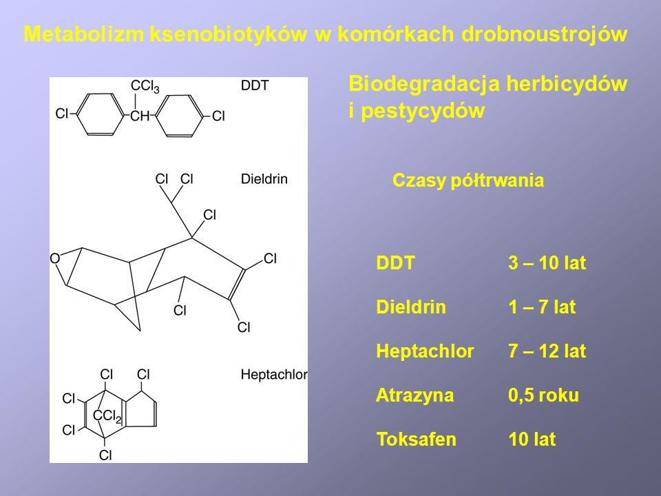 Wpływ położenia i liczby podstawników halogenowych na biodegradowalność herbicydów aromatycznych Biodegradacja halogenopochodnych związków aromatycznych Metabolizm ksenobiotyków w komórkach drobnoustrojów