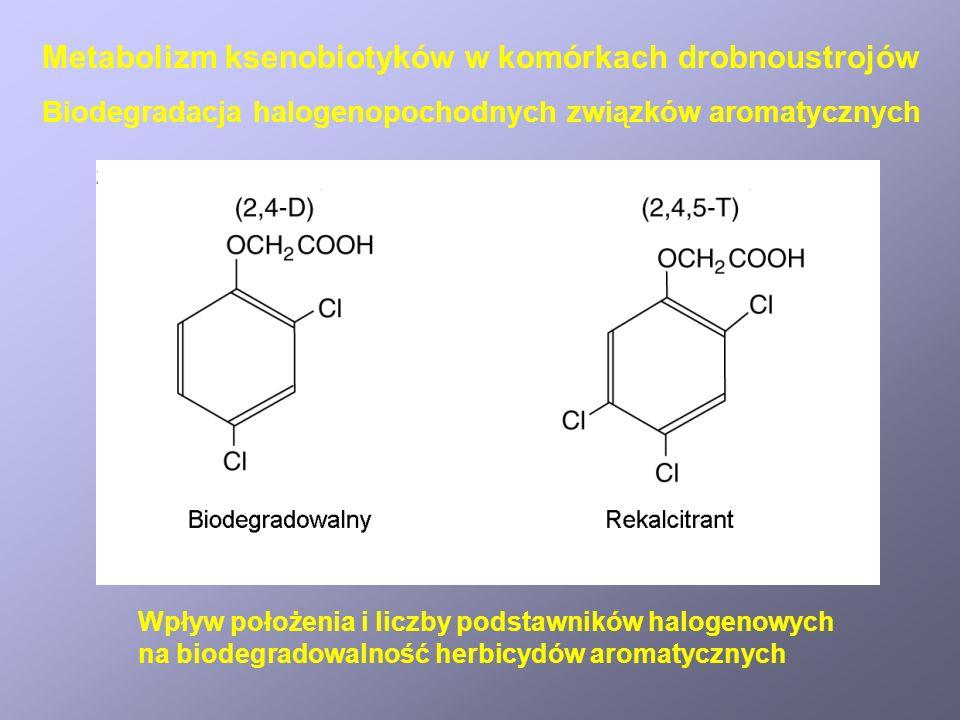 Biodegradacja herbicydu atrazyny przez konsorcjum bakterii Biodegradacja herbicydów i pestycydów Metabolizm ksenobiotyków w komórkach drobnoustrojów
