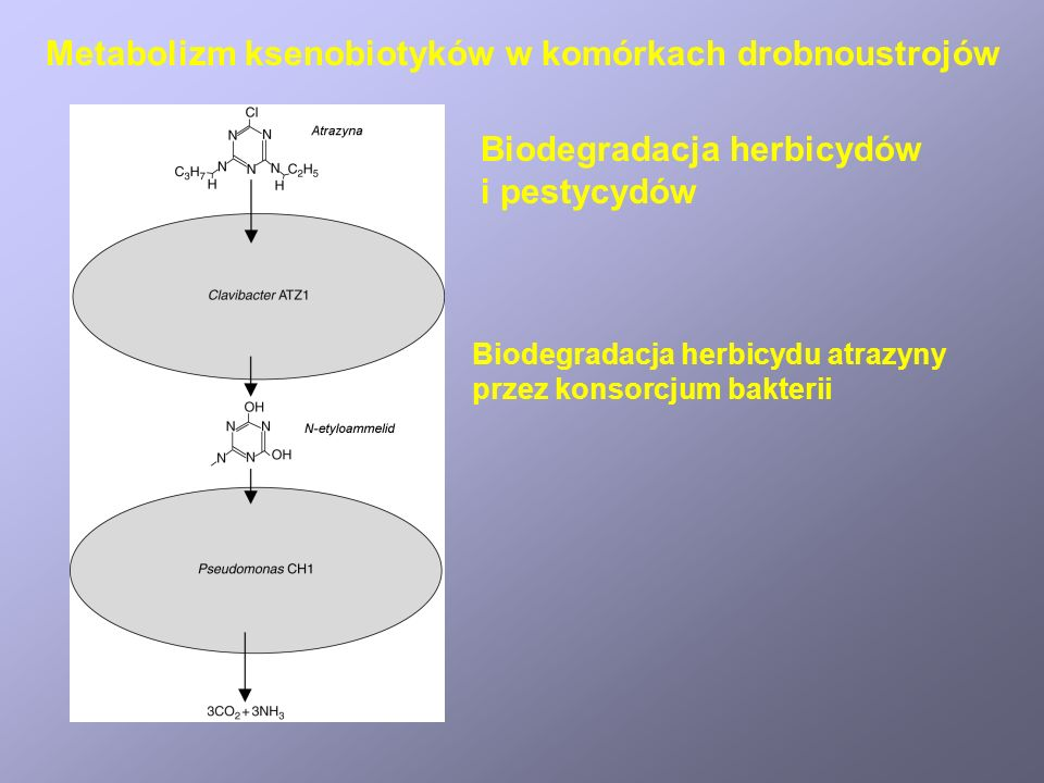 Metabolizm azotu amonowego i azotanów w bakteriach Nitryfikacja I.
