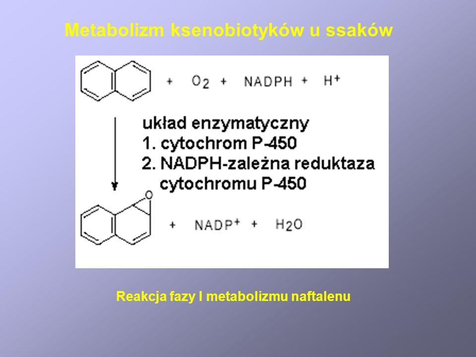 Mechanizm tworzenia kancerogennych pochodnych benzo[a]pirenu Metabolizm ksenobiotyków u ssaków
