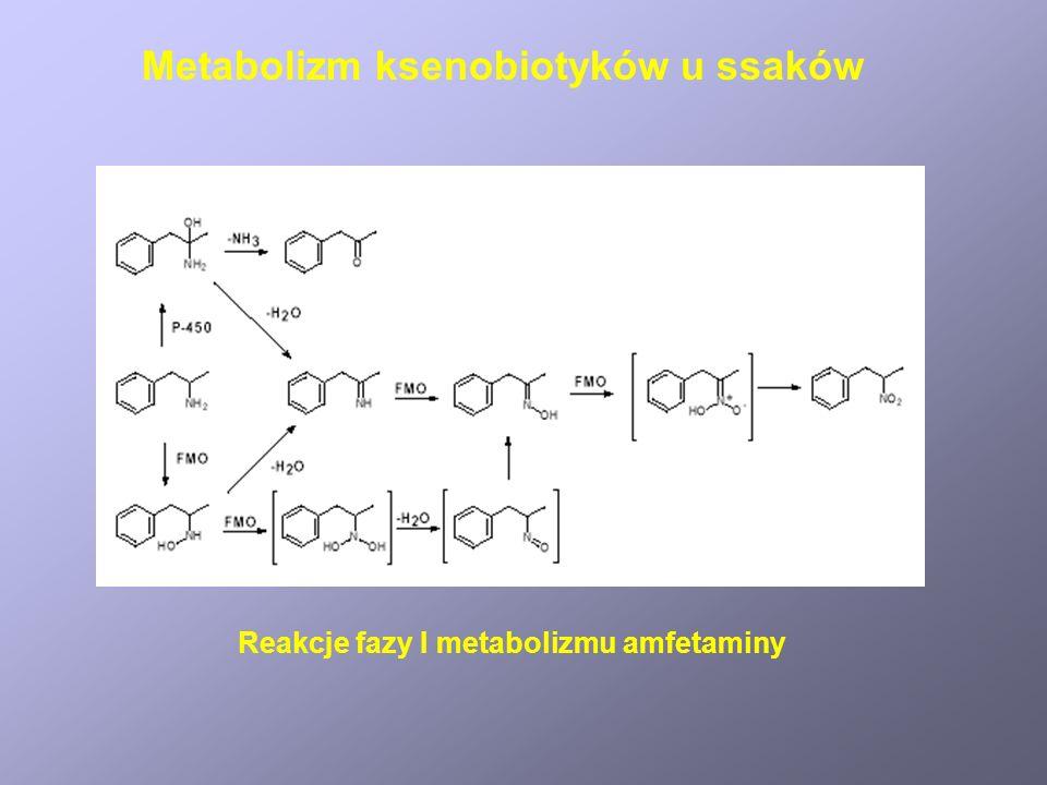 Metabolizm etanolu Disulfiram jest selektywnym inhibitorem dehydrogenazy aldehydowej Metabolizm ksenobiotyków u ssaków