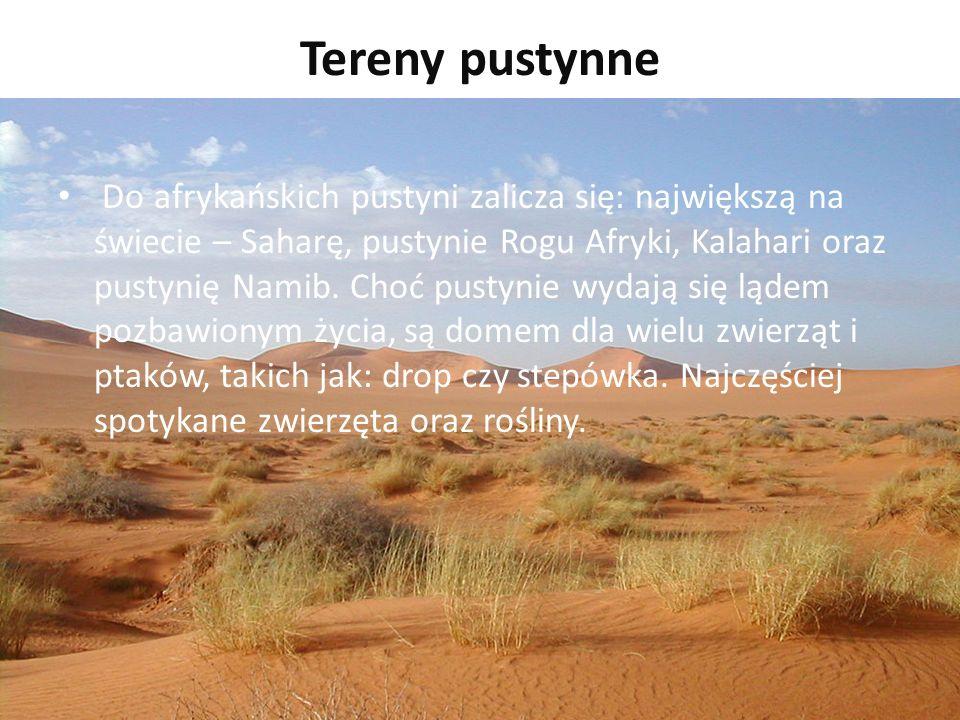 Tereny pustynne Do afrykańskich pustyni zalicza się: największą na świecie – Saharę, pustynie Rogu Afryki, Kalahari oraz pustynię Namib.