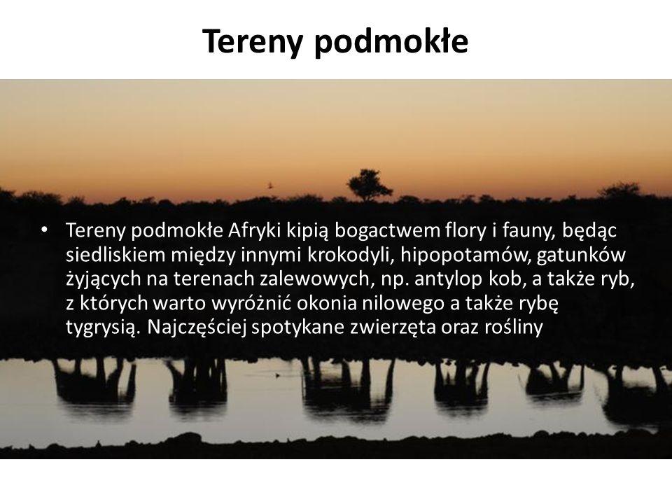 Tereny podmokłe Tereny podmokłe Afryki kipią bogactwem flory i fauny, będąc siedliskiem między innymi krokodyli, hipopotamów, gatunków żyjących na terenach zalewowych, np.