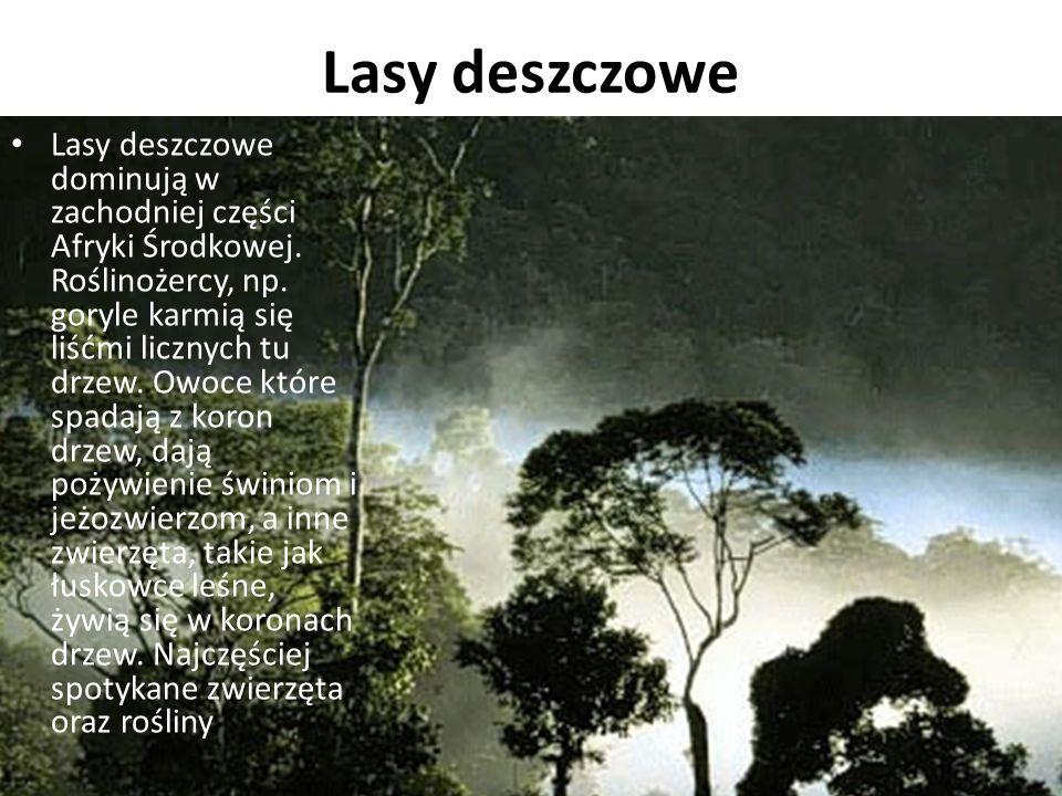 Lasy deszczowe Lasy deszczowe dominują w zachodniej części Afryki Środkowej.